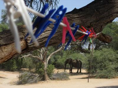Zo dicht bij de natuur in Namibië (c) Opensens