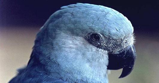 Papegaaien kijken in Pappamondo (c) Italia in Miniatura