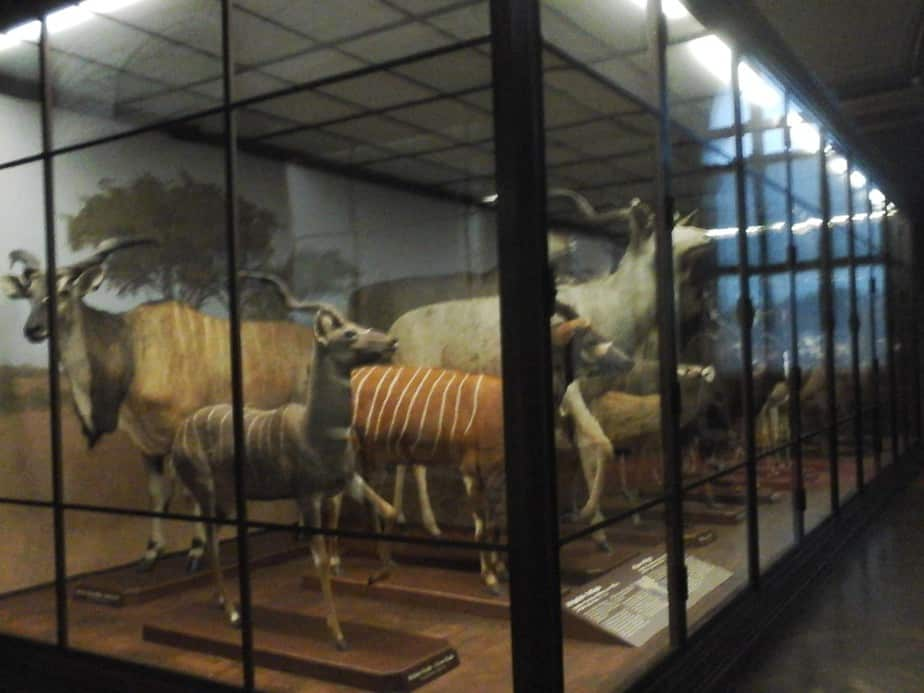 Vitrines en vitrines en vitrines vol dieren