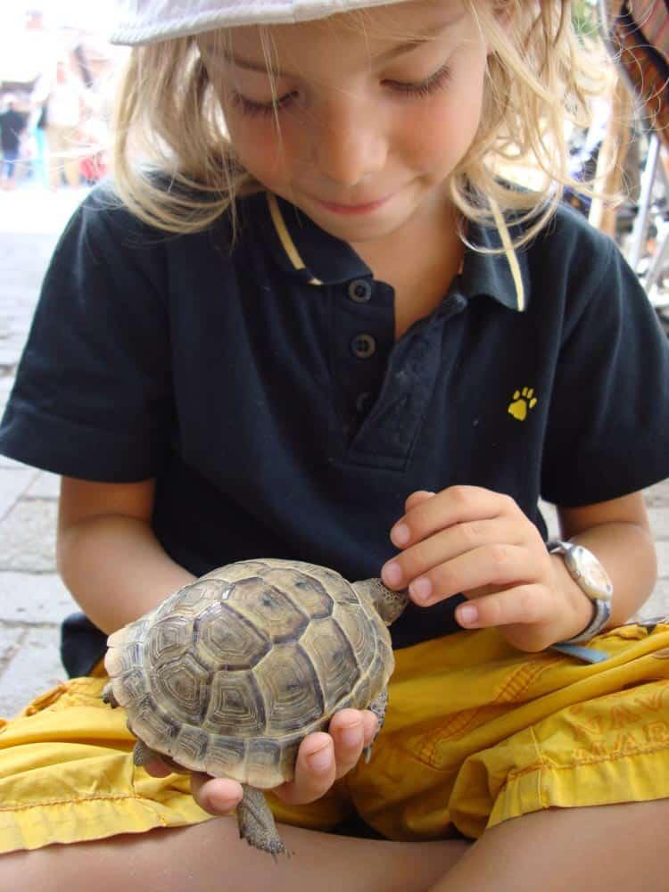 Schilla de schildpad (c) Srsck