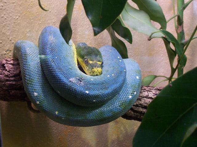 Slangen zijn er in alle kleuren van de regenboog (c) mheisel via Flickr
