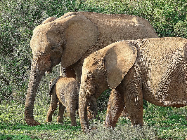Olifanten familie (c)  barbourians via Flickr