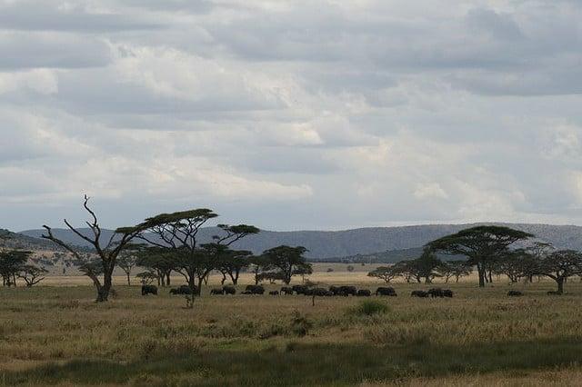 Kudde olifanten (c) IamNotUnique via Flickr