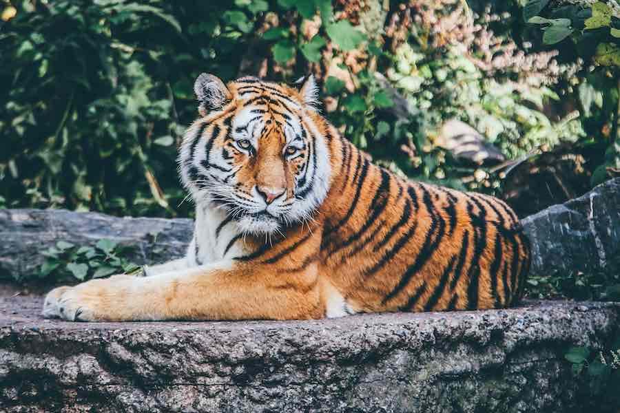 TOP 7 Gevaarlijkste zoogdieren