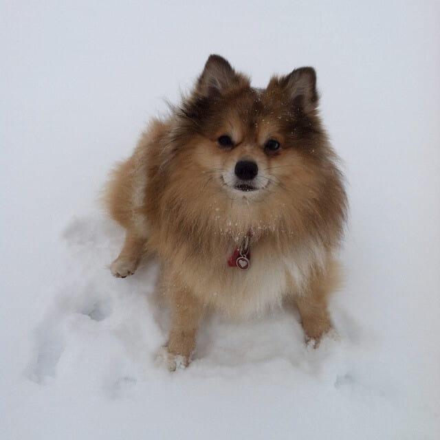 schattigste hond