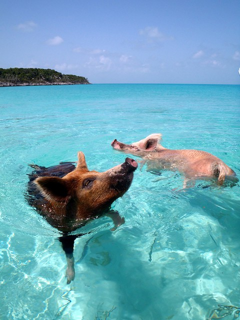 Exuma, Bahamas (c) cdorobek via Flickr.com