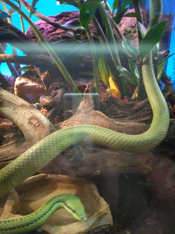 slang gif