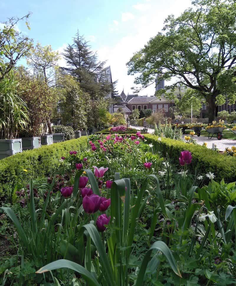 tulpen Hortus