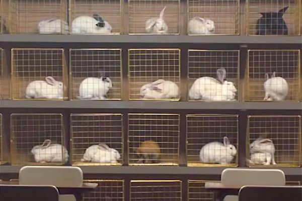 konijnen in US