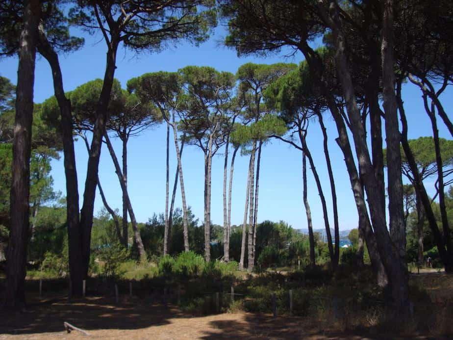 Île de Porquerolles zuid-frankrijk